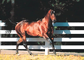 vinyl horse fencing