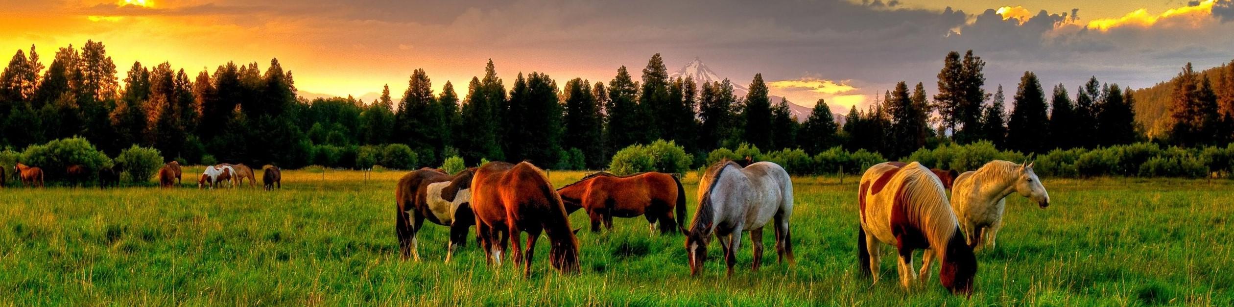 Vinyl Fencing For Horses