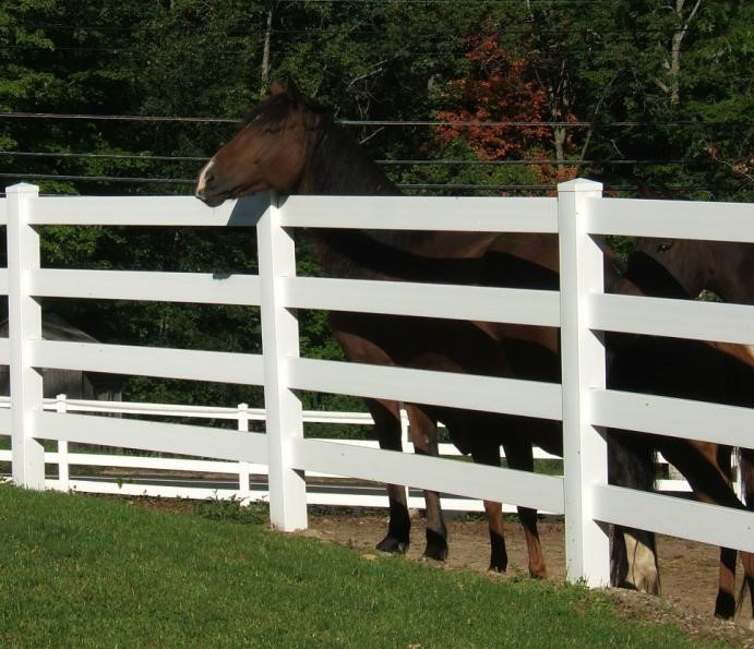 A brown horse hangs its head over a white vinyl fence