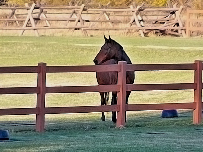 Horse looks over a mocha dark brown horse fence