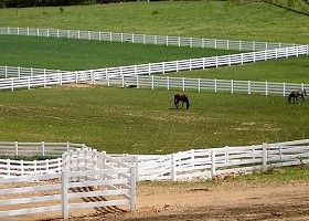 tan horse fence