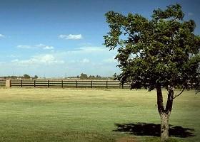 black horse fencing